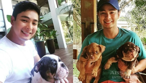 Pinoy Actor Coco Martin's aww-worthy moments with his dog babies