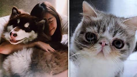 IN PHOTOS: Meet Janella Salvador's cute pets