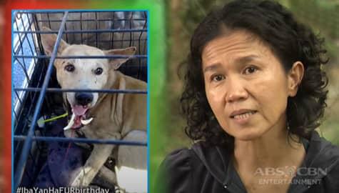 'Deserve nila ang second chances': Jervy, bumuo ng animal shelter para matulungan ang stray dogs | Iba 'Yan Image Thumbnail