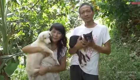 Mag-asawa, ipinakita ang kanilang 48 na aso at 24 na alagang pusa | Rated Korina Image Thumbnail