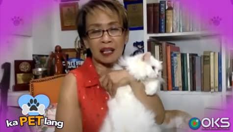 KaPET Lang - Episode 3 Teaser | Online Kapamilya Shows Image Thumbnail
