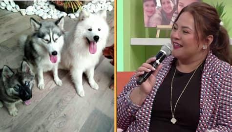 Magandang Buhay: Momshie Karla, may 21 dogs! Image Thumbnail