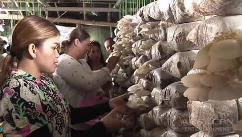 Magandang Buhay: Team Momshies, binisita ang mushroom farm sa Antique Image Thumbnail