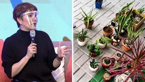 Magandang Buhay: Amy, nag-share ng plantita tips! Image Thumbnail