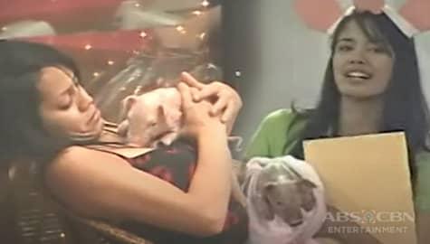 PBB Balikbahay: Celebrity Edition Housemates, binigyan ng season-long task na mag-alaga ng inahing baboy Image Thumbnail